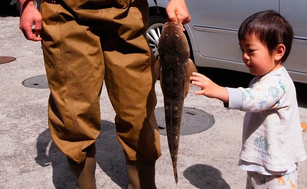 2011年5/3富浦西浜沖で釣った本ゴチ(マゴチ)